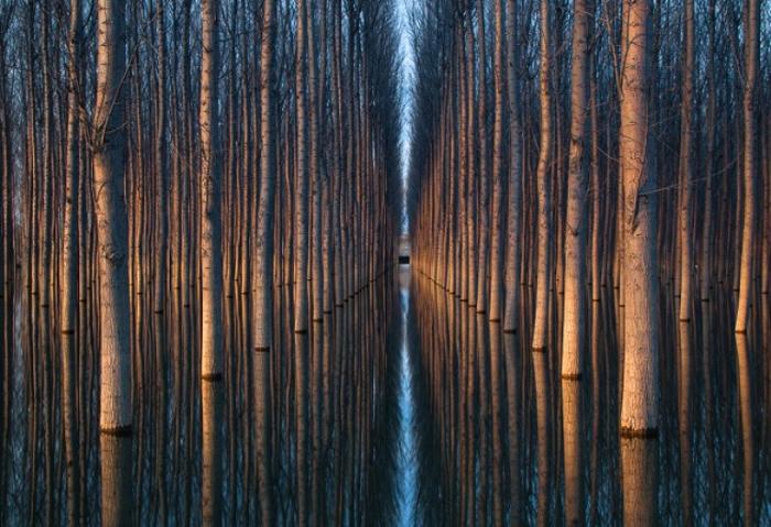 Стволы деревьев. Отражение.