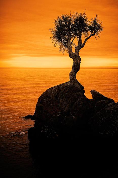 Ведьмино дерево.