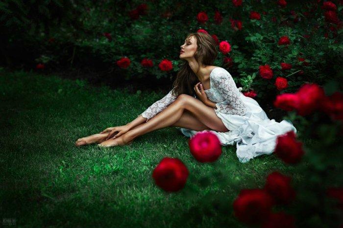 Розовый куст. Автор фото: Беляева Светлана.