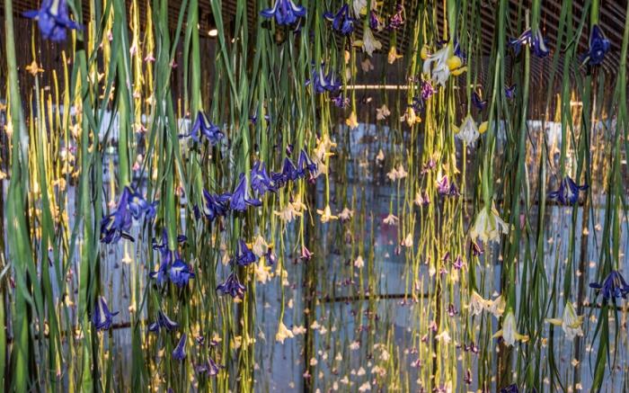 Цветочные инсталляции из сотни разноцветных ирисов. Автор: Rebecca Louise Law.