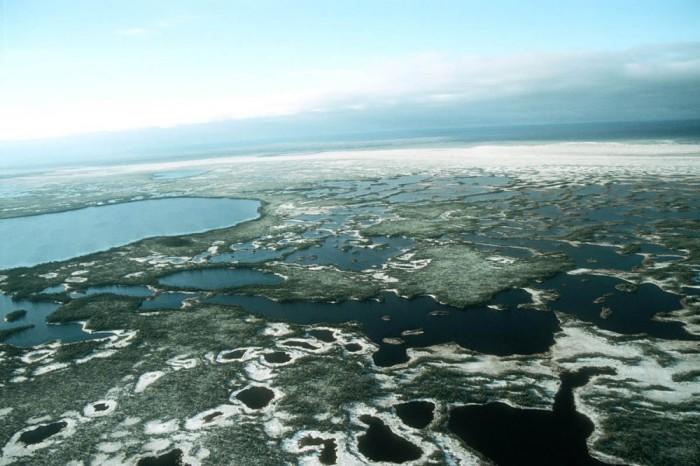 Большие Васюганские болота в Западной Сибири.