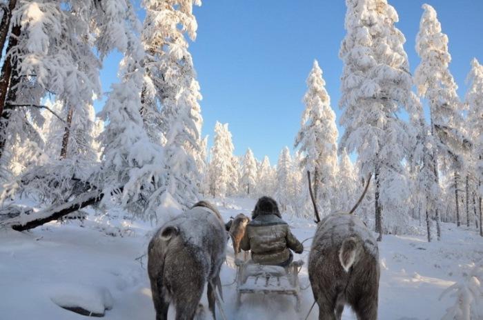 Зимняя сказка. Полюс холода, Якутия.