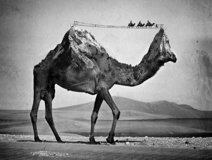 Пустыня. Автор работ: Сара Деремер (Sarah Deremer).