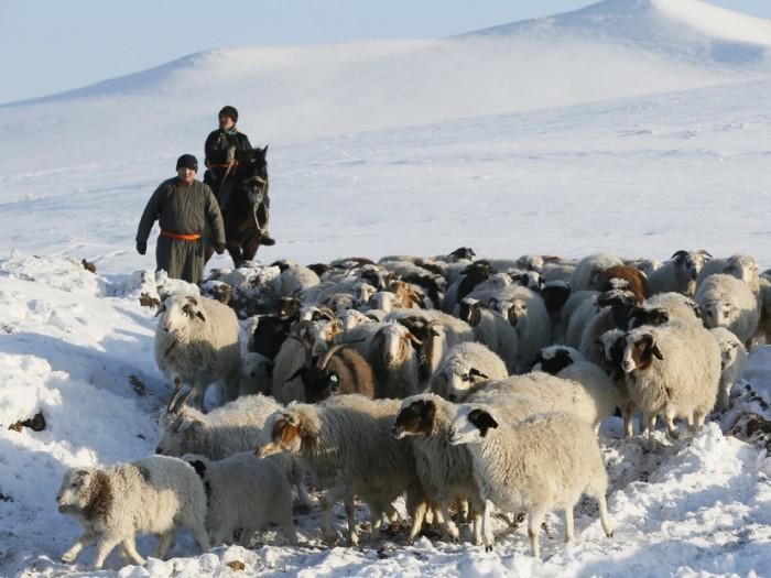 Пастухи овец.
