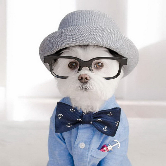 Тоби - Очаровательный Пёс-хипстер.