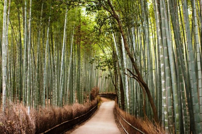 Бамбуковый лес, Киото, Япония.
