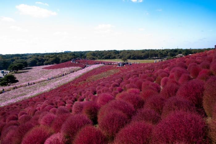 Приморский парк Хитати, Хитатинака, Япония.