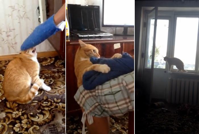 Видео-хит из России: мстительный кот обращает в паническое бегство своего обидчика