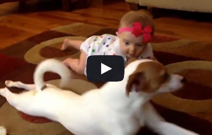 Смышленая собака учит ползать маленького ребенка