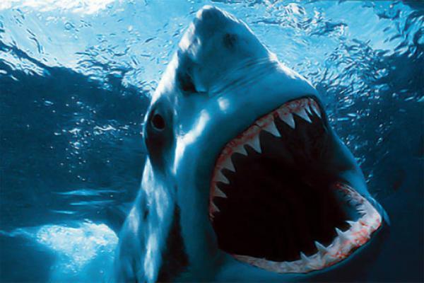 Активистом общества Царская Месть удалось истребить уже 3% акул-убийц