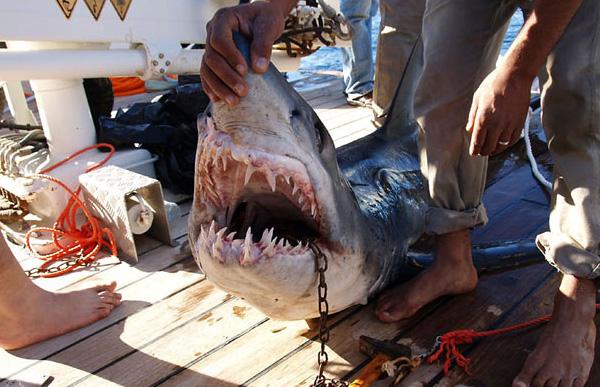 Инвалиды мстители устраивают акулам