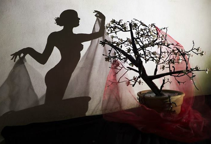 Прекрасная «Акина» -  тень японской Сакуры. Автор Teodosio Sectio Aurea.