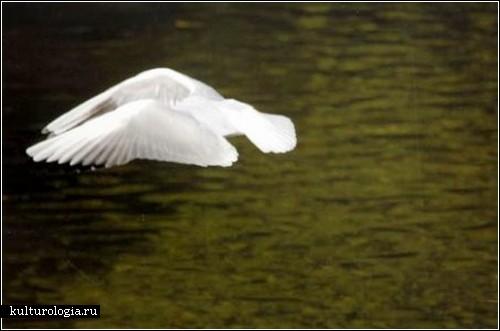 Дикая природа: работы слепого фотографа