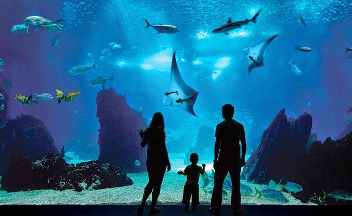 Самый большой в мире океанариум. Сингапур.