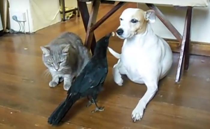 Птица кормит своих друзей: котика и собачку.