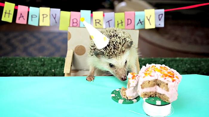 Ежик поздравление с днем рождения