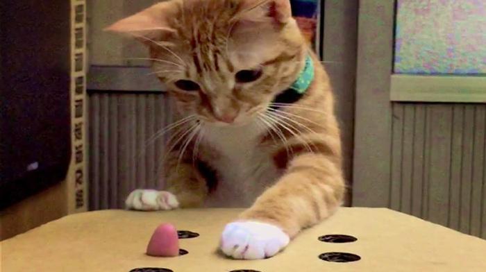 Как раззадорить кота, играя с ним в простую игру.