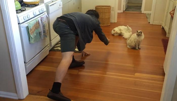 Кото-керлинг. Кот, который любит, чтобы его катали по полу.
