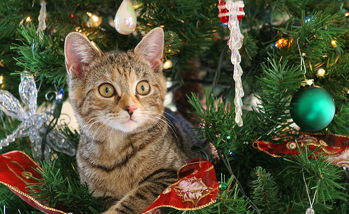 Коты знакомятся с Новогодней елкой.