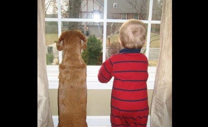 Малыш и собака встречают папу!