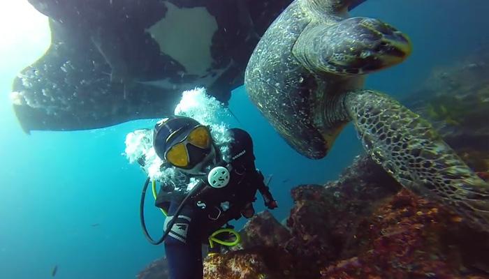 Гармоничное подводное плавание в компании Гигантской манты и Зеленой черепахи.