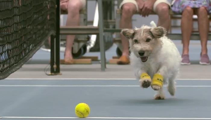 Лучшие в мире болбои. Собаки на теннисном корте.
