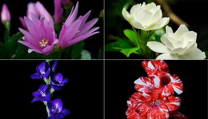 Невероятная красота цветения. Распускающиеся цветы.