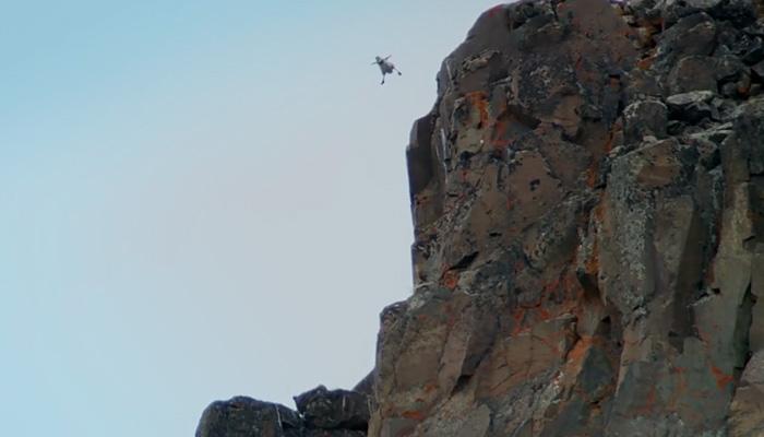 Гусенок прыгает со скалы.