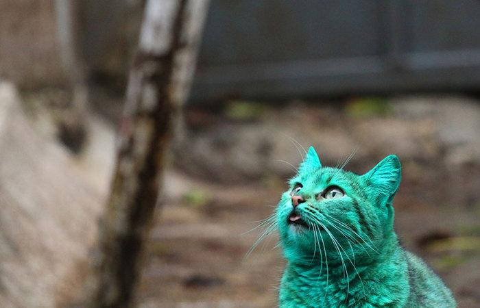 Очаровательный кот странного цвета.