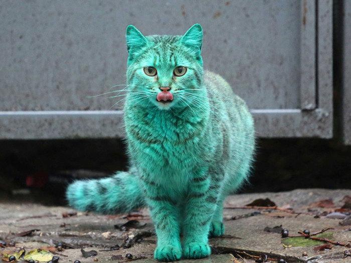 Уникальный изумрудный кот.