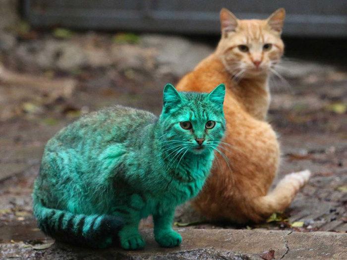 Кот, который сам себя выкрасил в зеленый цвет.