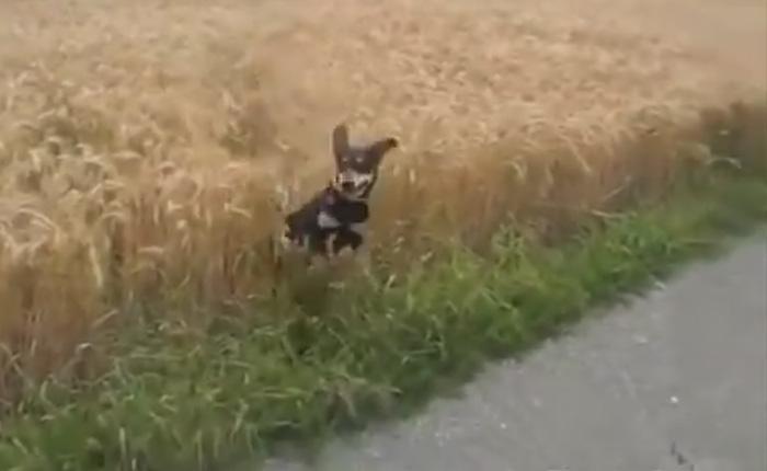 Самый счастливый пес на свете.
