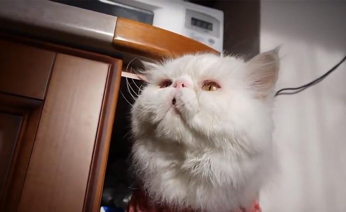 Котик русским языком объясняет, что ему мало еды.