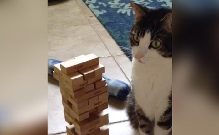 кот, который любит и умеет играть в настольные игры.