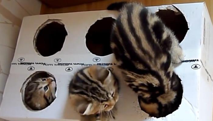 Самый недорогой и действенный способ занять котят.