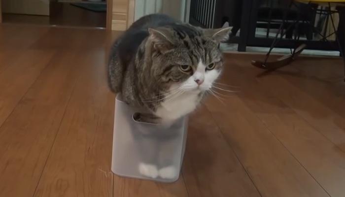 Кот Мару просто обожает коробочки.