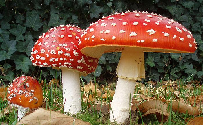Как растут грибы: атмосферное таймлапс-видео о красоте нашей планеты.