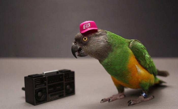Самый милый и дрессированный попугай.