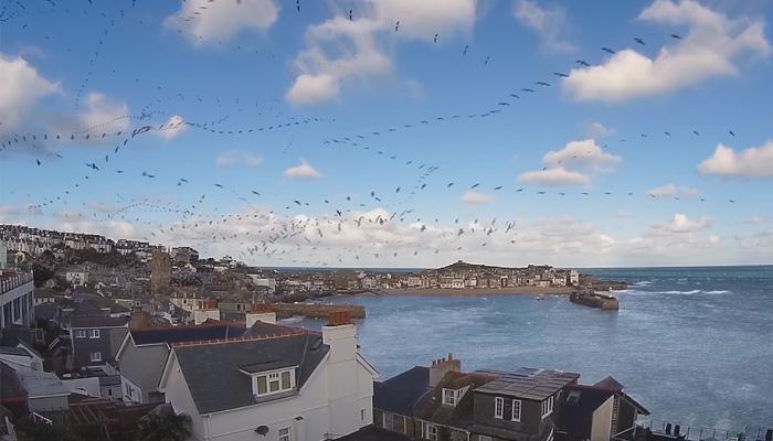 Траектории полета птиц.