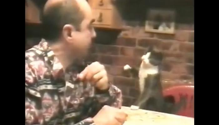 Кот использует язык жестов, чтобы выпросить еду.