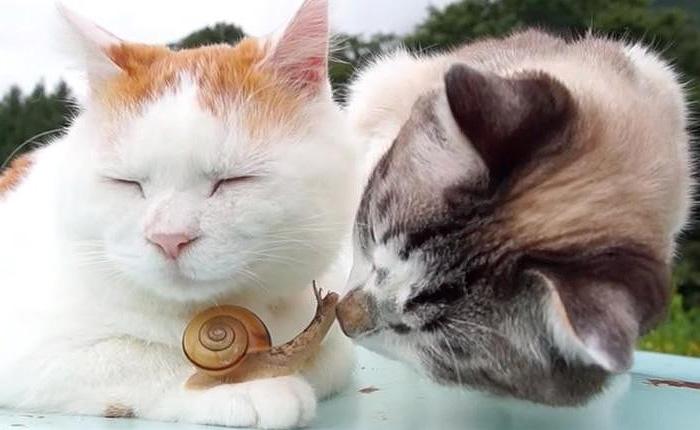 Созерцательная кошка, любознательный кот и бесстрашная улитка.