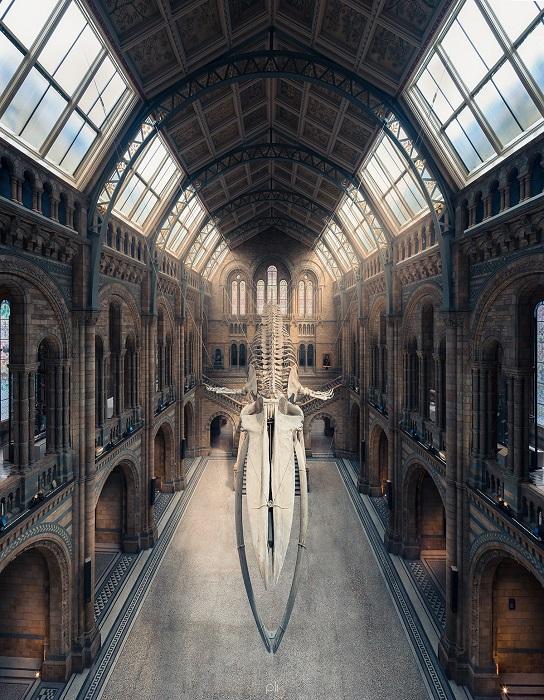 Панорамный снимок огромного скелета синего кита в лондонском музее естествознания.
