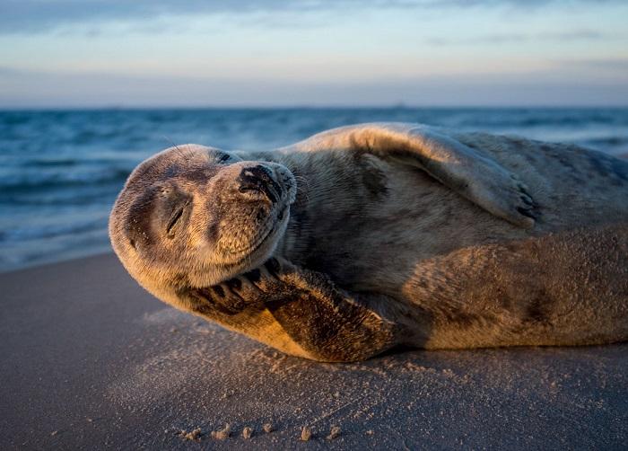 Автор фотографии «Модель № 1 – счастливый тюлень!» – Ларс Лакке (Lars Lykke).