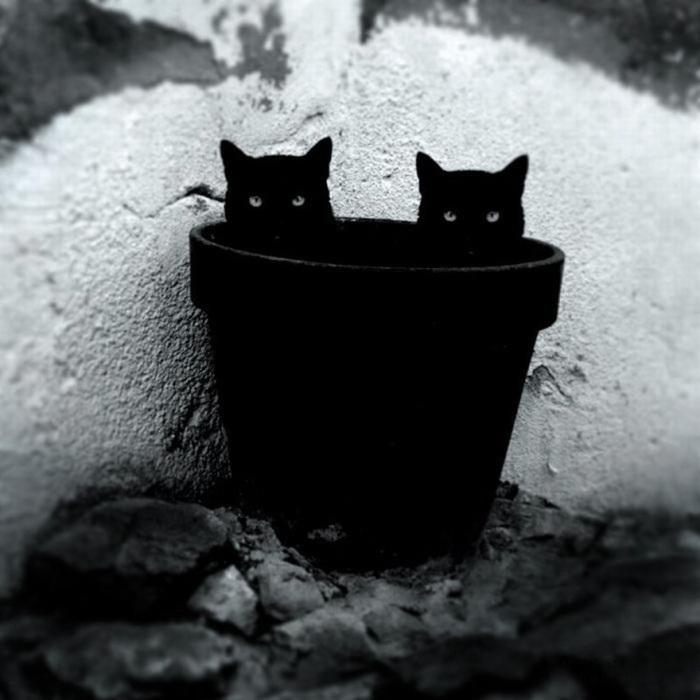 Маленькие черненькие озорники похожи на чертят.