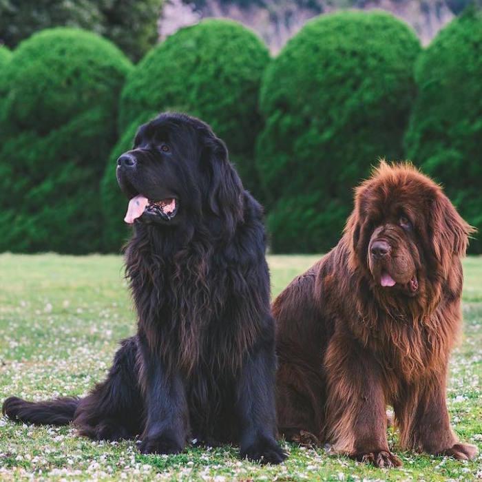 Псы Брюс и Макс.