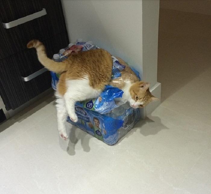 И как я должен пить эту воду?