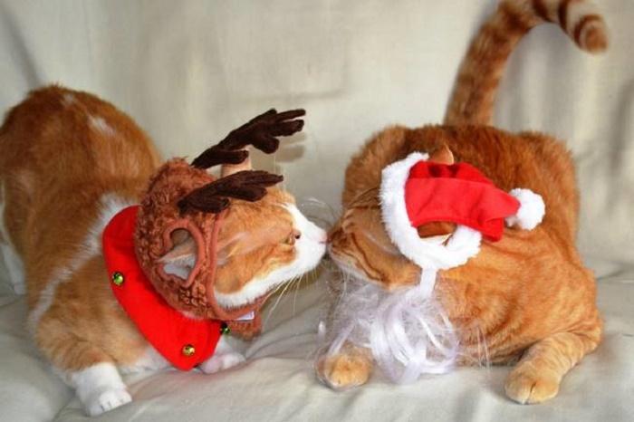 Рыжие коты переодеты к торжеству в костюм Санты и его верного оленя.