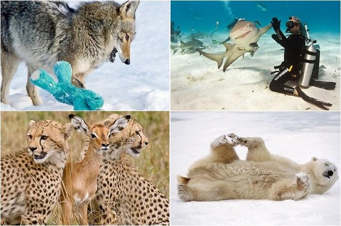 Дикие животные, показавшие себя с другой стороны.