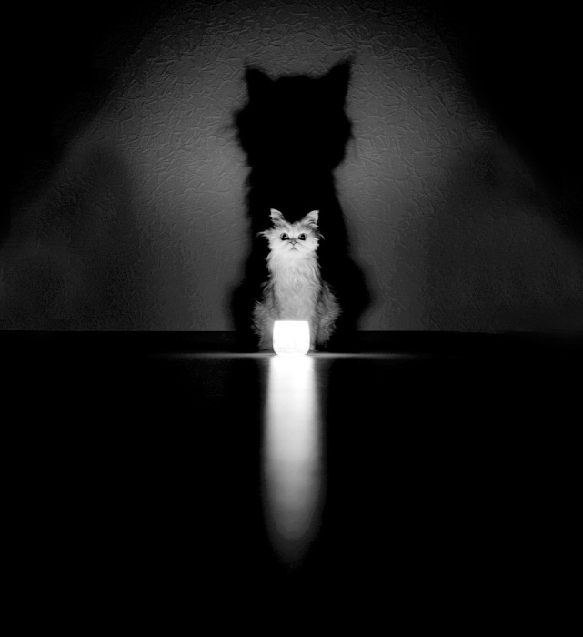 Силуэт кота-призрака увеличен в несколько раз.