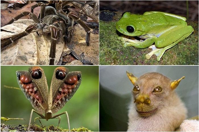 Самые необычные существа планеты.